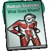 Thumbnail popup human anatomy