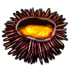 Thumbnail popup sea urchin roe