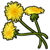 Thumbnail popup dandelions
