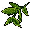Thumbnail popup relaxing green tea leaves