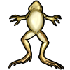 Thumbnail popup fat frog