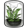 Thumbnail popup grow your own fern